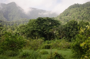 View of the Maya Mountains from TREES