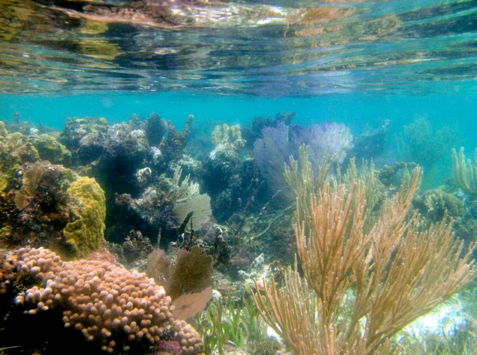 Snorkeling on a patch reef near South Water Caye.