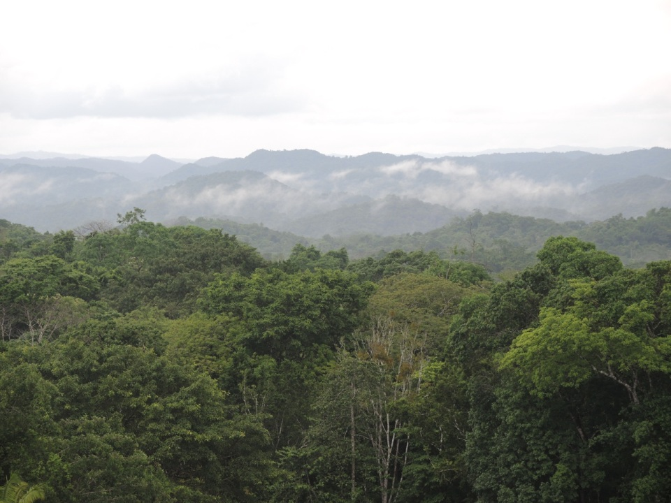 Maya Mountains