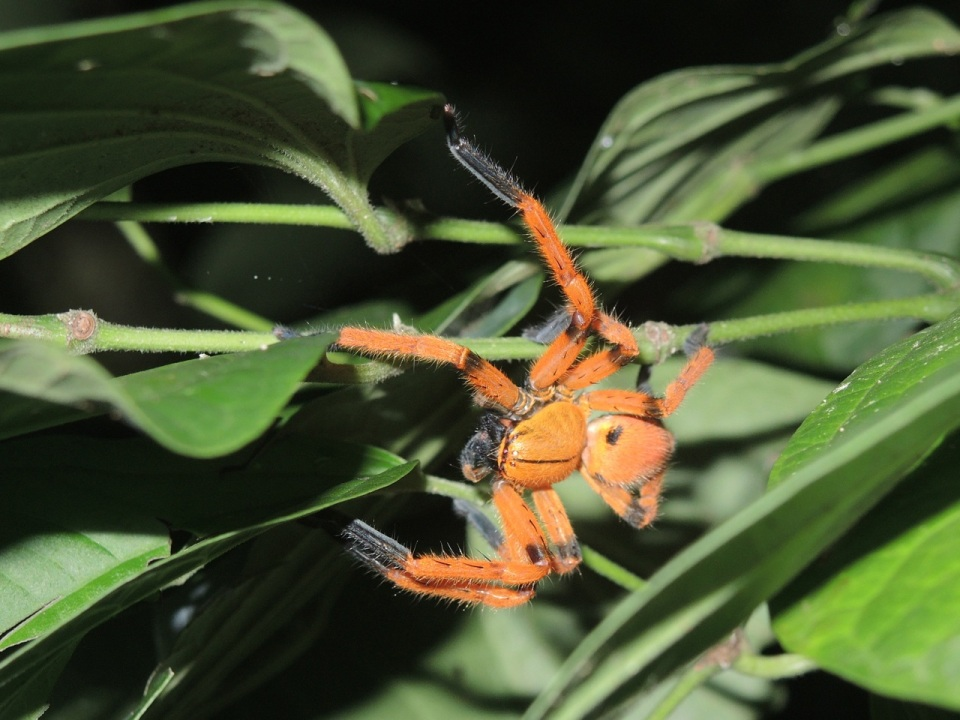 A very colorful (and big) spider...