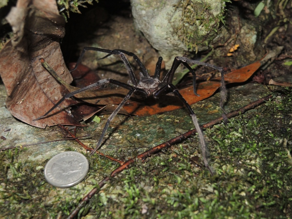More fun with big spiders...