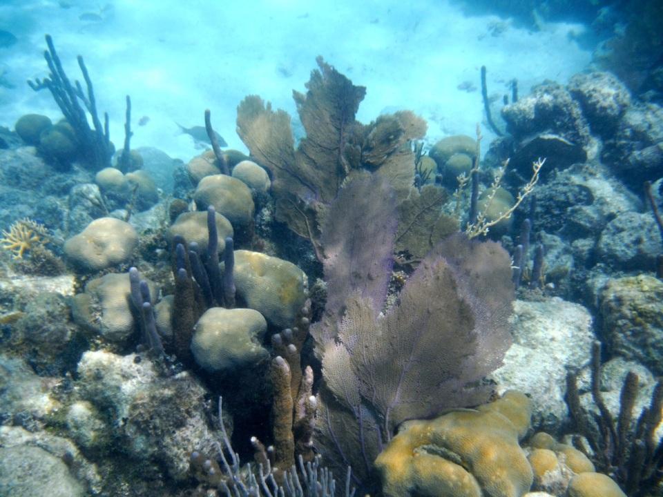 Sponges and Fans