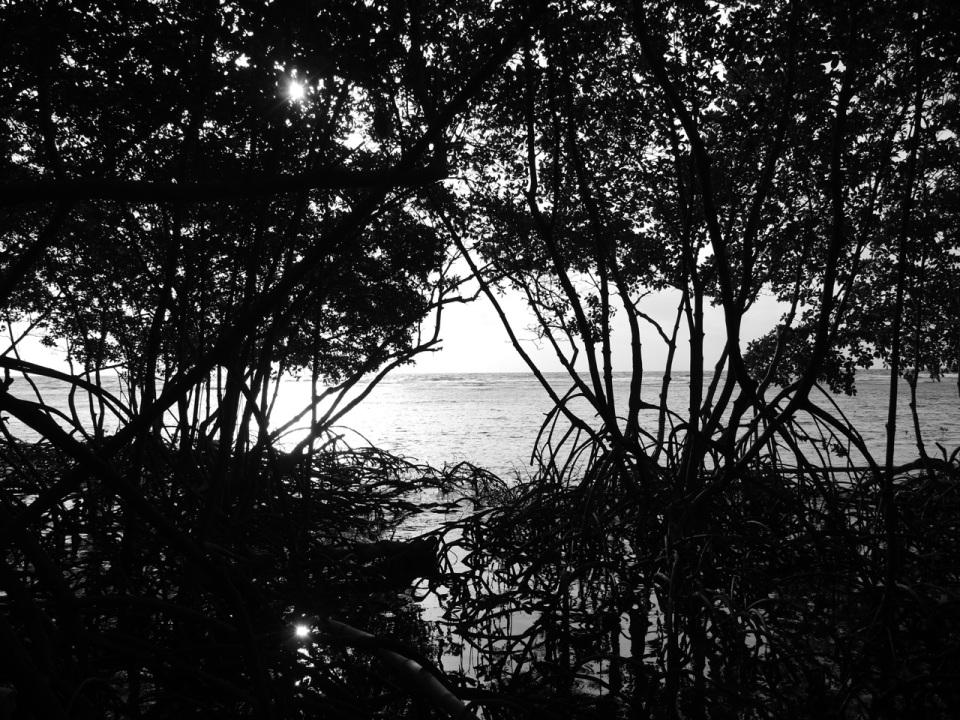 Mangroves and Flats at Sunrise.