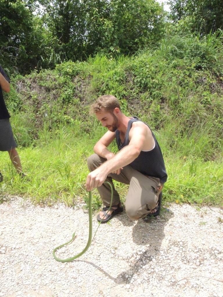 Vine Snake 1
