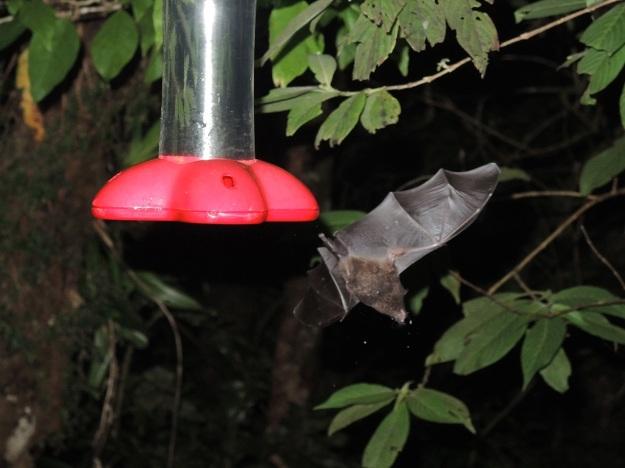 Bat Feeder 2