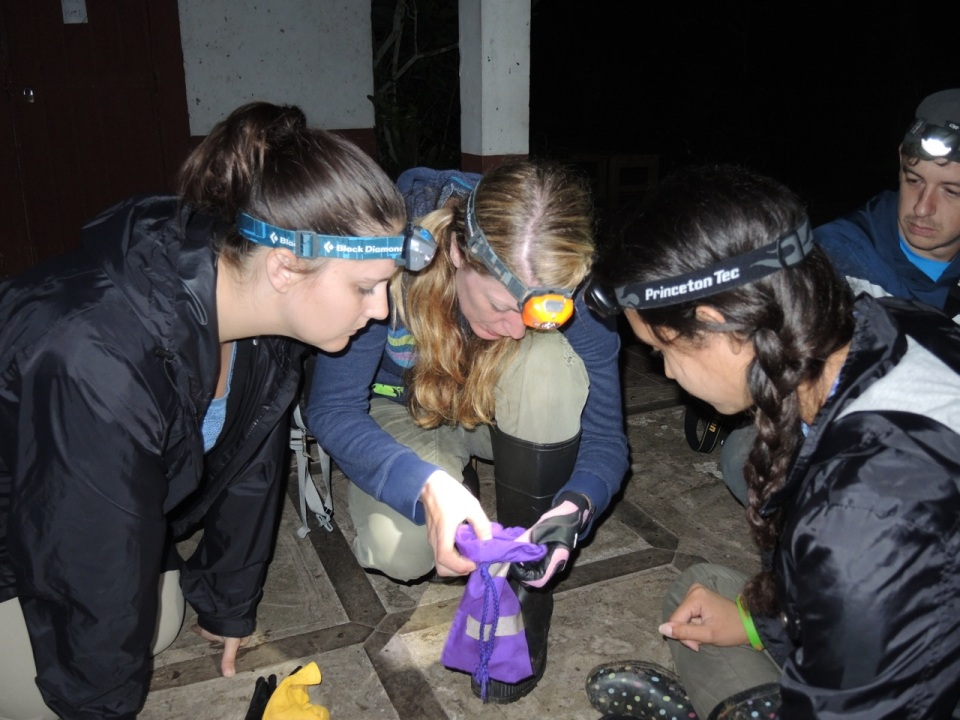 Channa, Trisha, and Krystel await the emergence of the Myotis elegans.