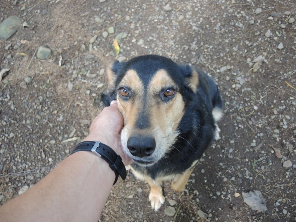 Dog El Ceibo