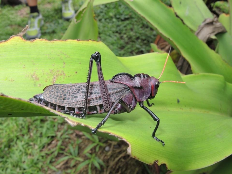Grasshopper Tortuguera 2
