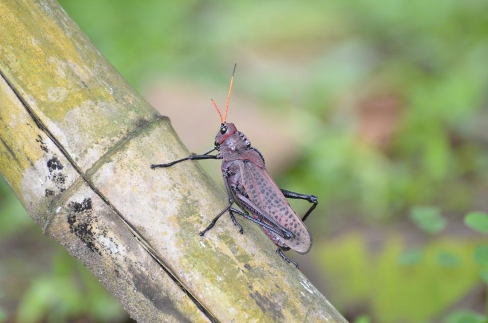 Cool Grasshopper.