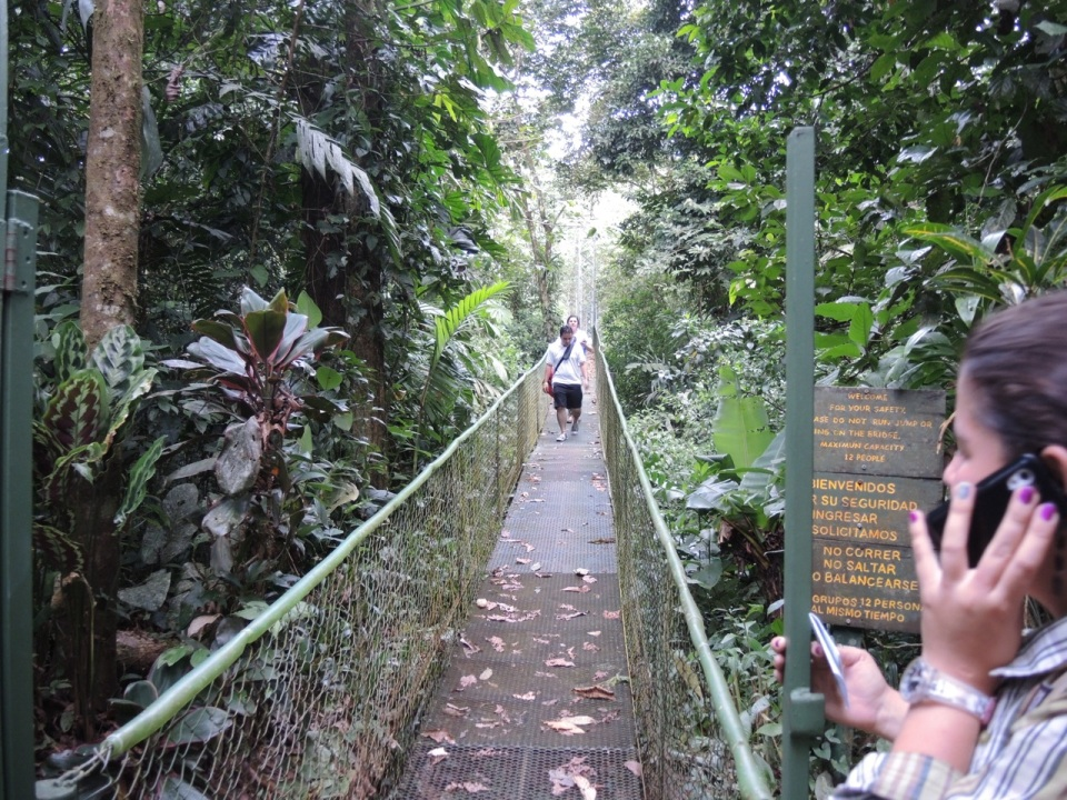 The suspension bridge at La Selva Verde.