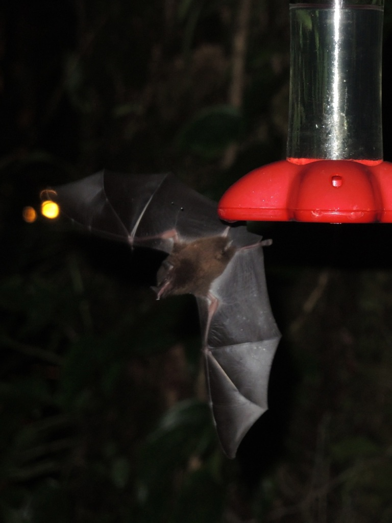 Nectar Bat HB Feeder