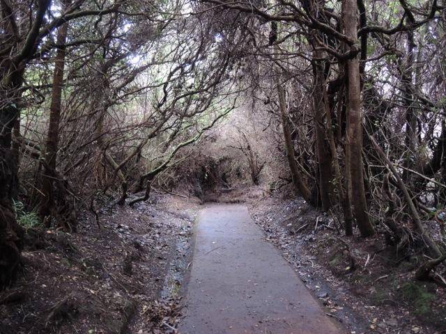 Poa Trail C & E.