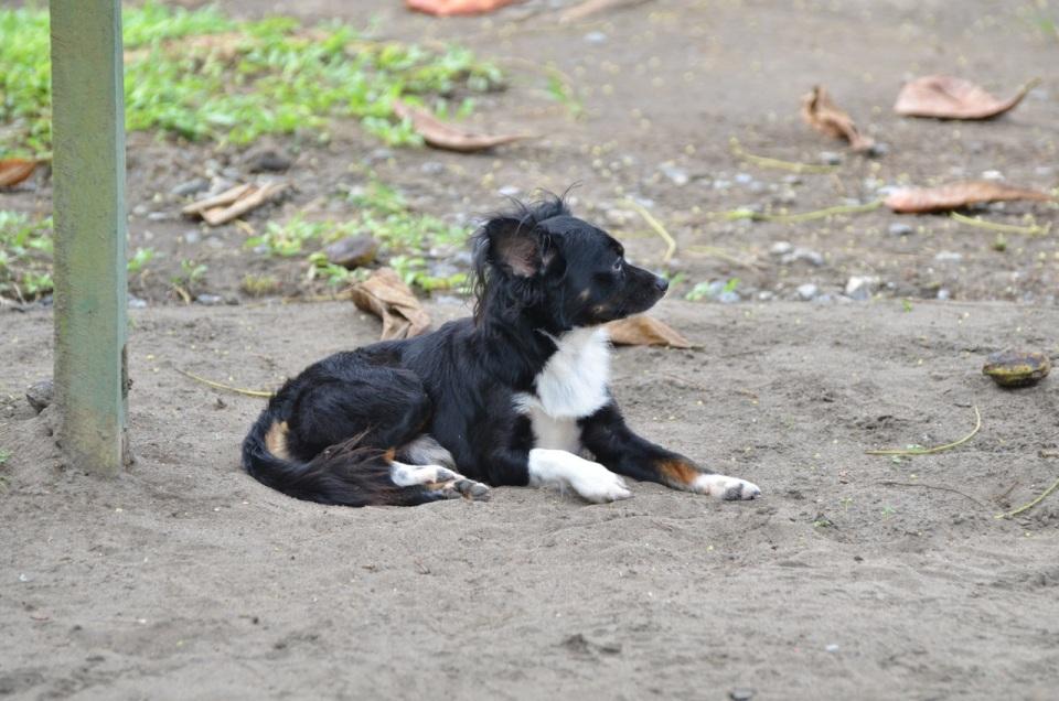 Pup 1