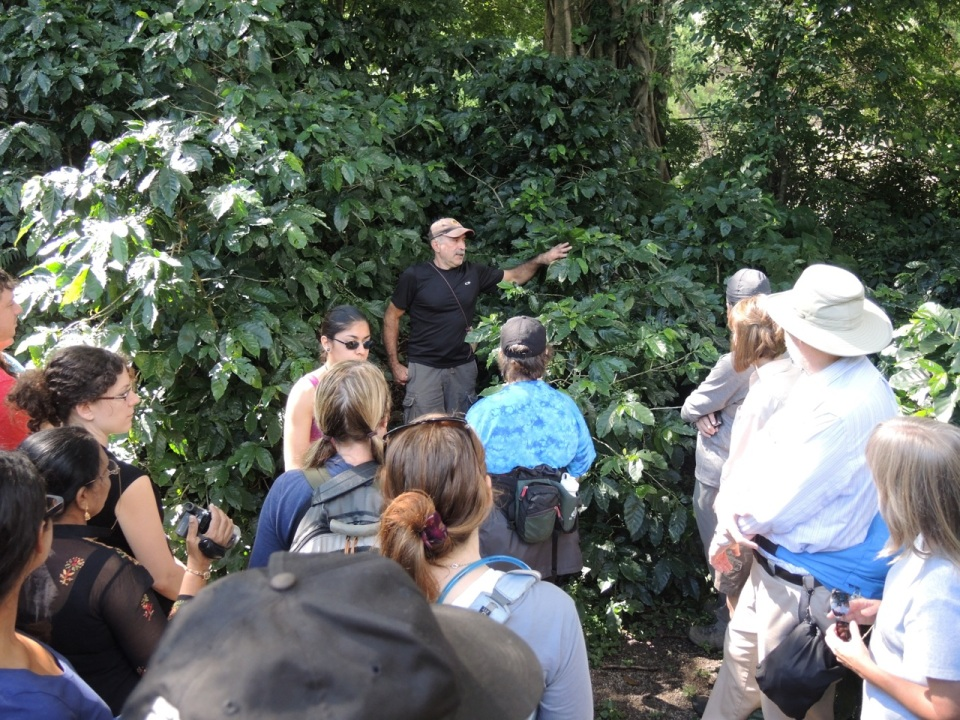 Sr Badilla showing us his shade-grown coffee plants.