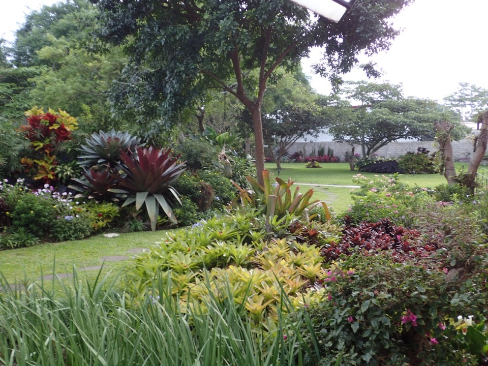The gardens at the Hotel Bougainvillea.