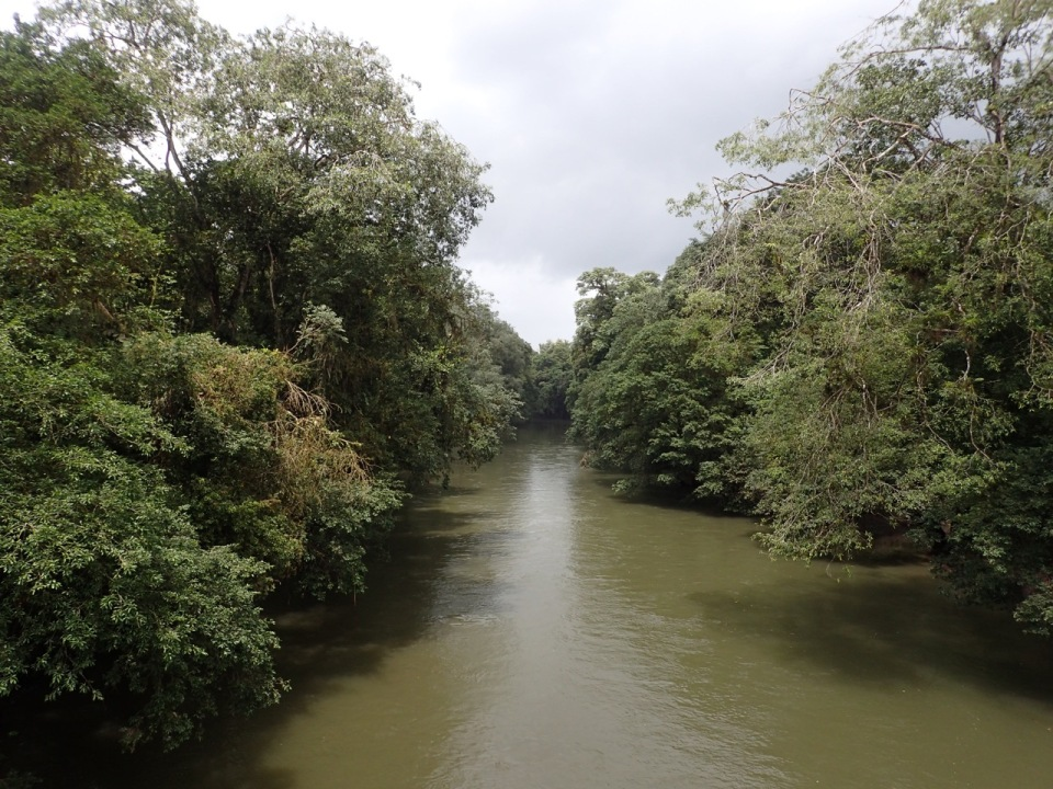 La Selva Biological Station is located along the banks of the Sarapiqui River in Costa Rica.
