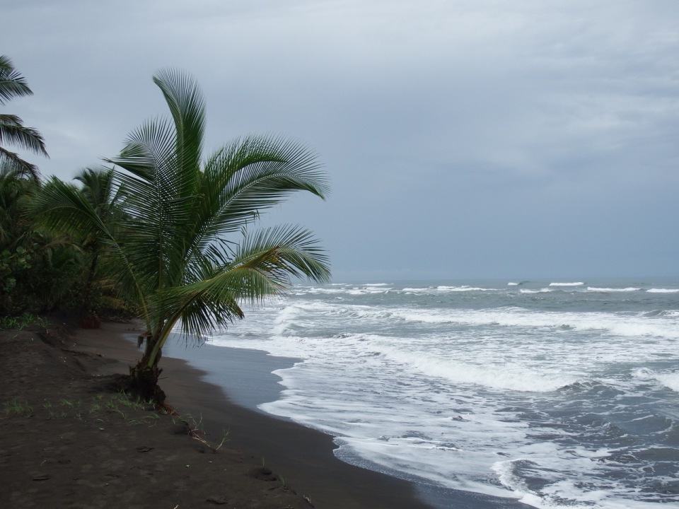 This is the beach to the east of Tortuguero and Laguna Lodge.  This extent of beach along northern Costa Rica is an immensely important nesting ground for multiple species of sea turtles.