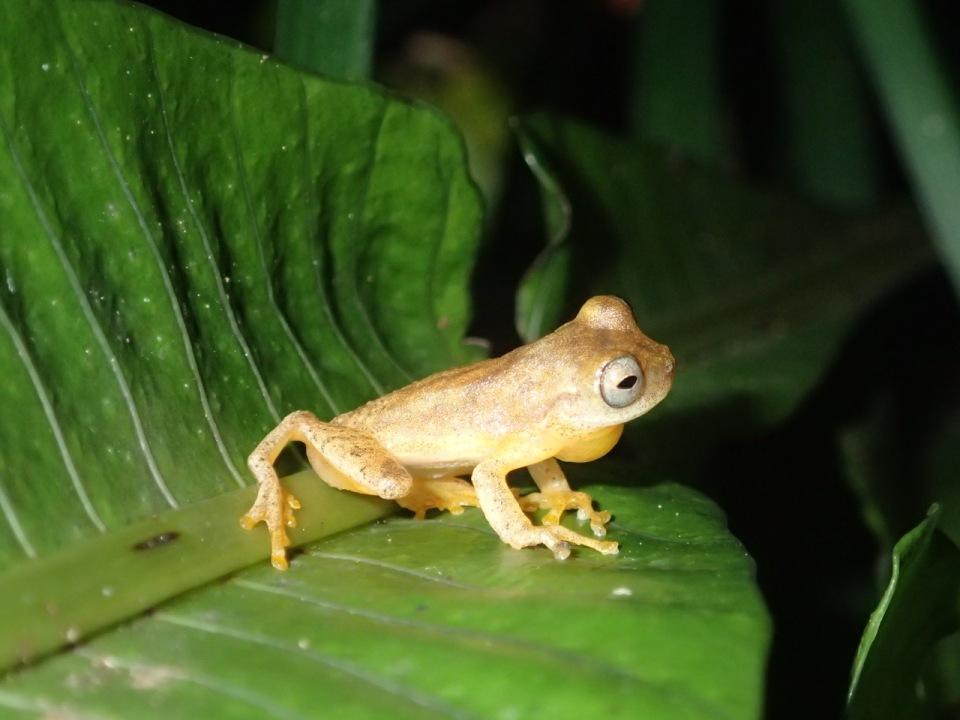 Dink Frog.